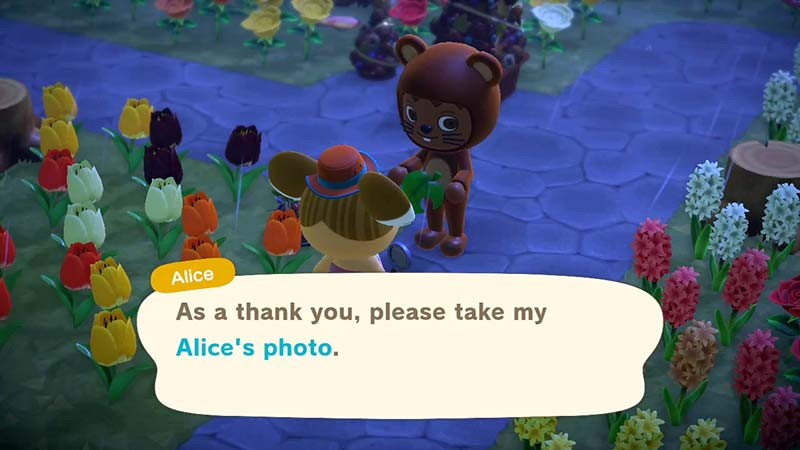 (Animal Crossing NH Alice Photo Image)